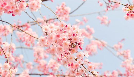 【兵庫県】子どもと楽しめるお花見スポット2018【駐車場無料】